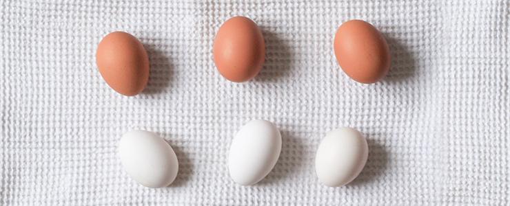 blog_Eggs